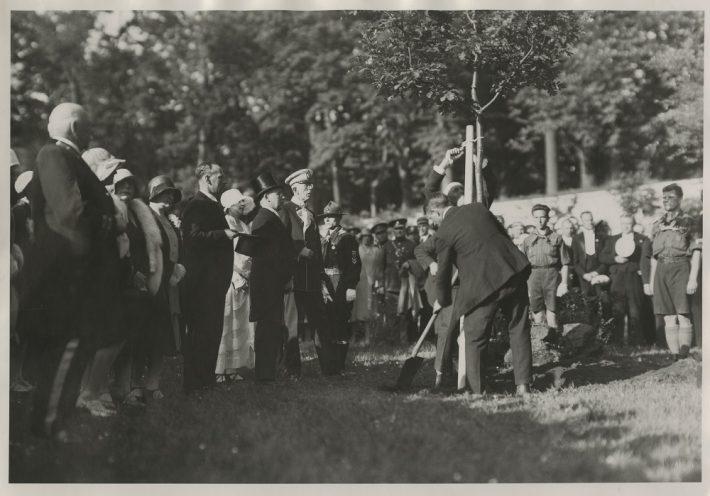 Kuningatamme istutamine Kadrioru pargis 1929. Foto: Rahvusarhiiv.